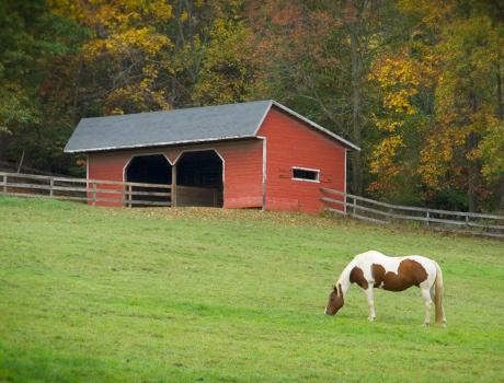 HORSE-&-BARN